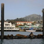 Red-Anchor-charter-wildlife-harbor-seals-morro-bay